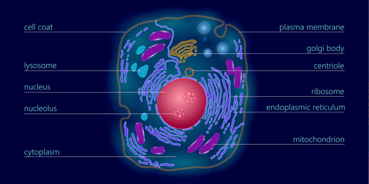 what are exosomes | definition