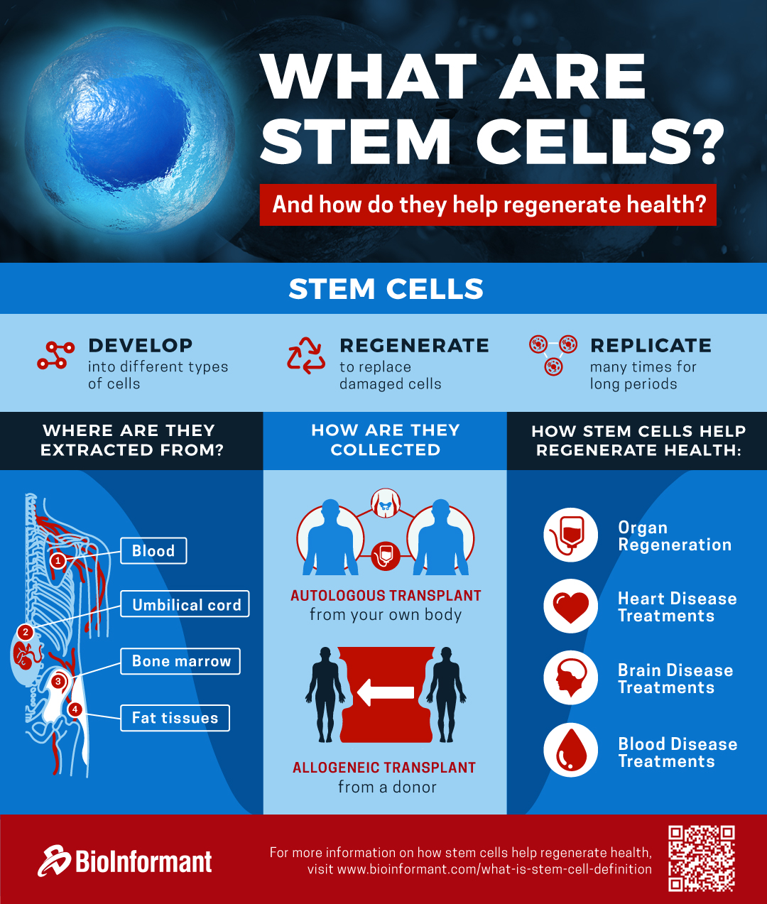 Infographic | What Are Stem Cells