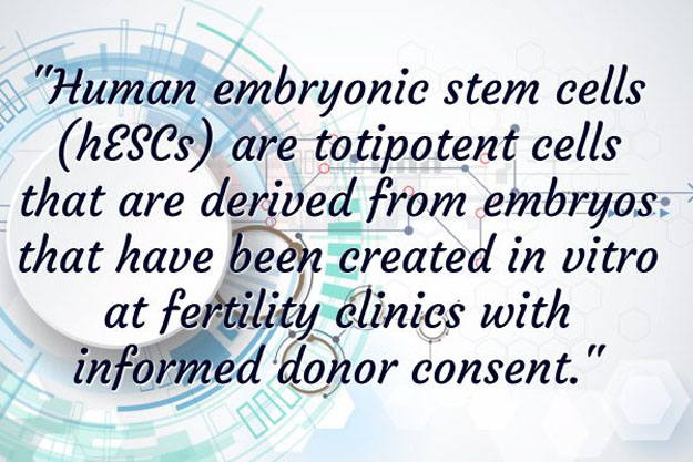 Embryonic Stem Cells | Where Do Stem Cells Come From? | Basics Of Stem Cell Therapy
